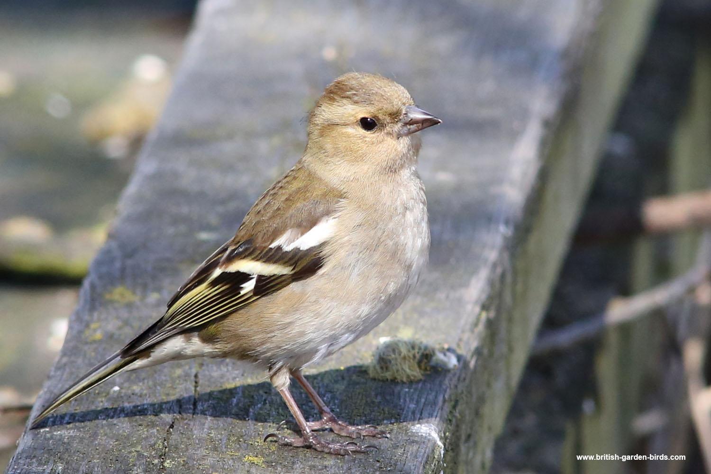 Birds Nest Garden Room