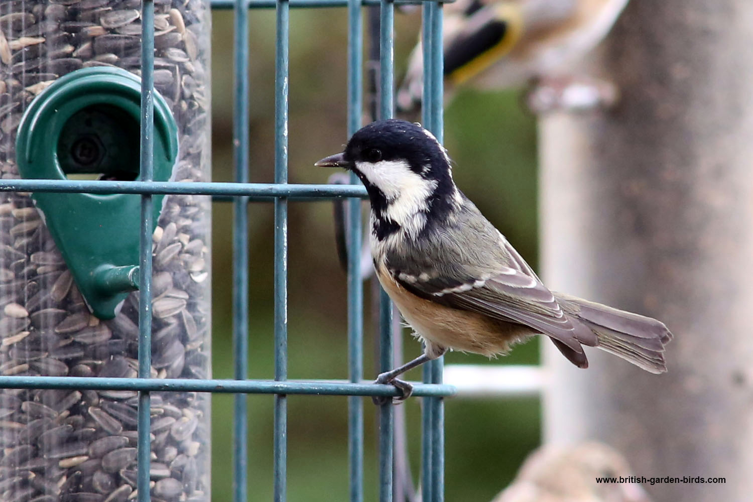 Sunflower seed feeder