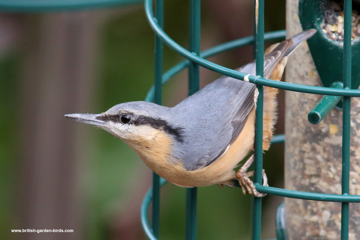 Mixed seed feeder