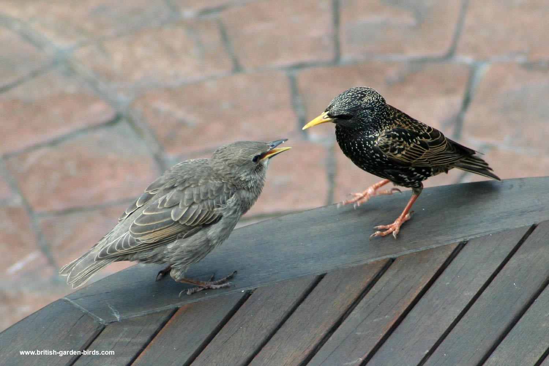 garden birds photos starling to wren